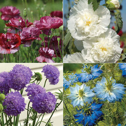 Cottage Garden Favourites Collection
