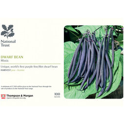Dwarf Bean 'Mistic' (French Bean) (National Trust)