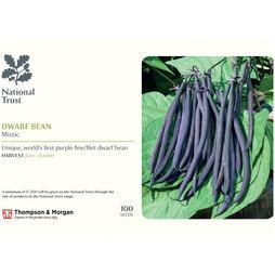 Dwarf Bean 'Mistic' (French Bean) (National Trust)