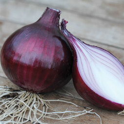 Onion 'Electric' (Autumn Planting)