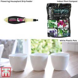 Flowering House Plant Potting Starter Pack