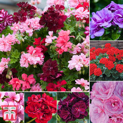 Geranium Saver Collection