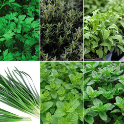 Gardeners Herb Collection