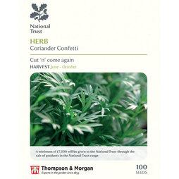 Coriander 'Confetti' (National Trust)