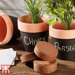 Herb Kit with Terracotta Chalk Pots
