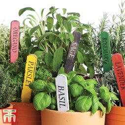 Nurseryman's Choice Herb Collection