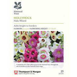 Hollyhock 'Halo Mixed' (National Trust)