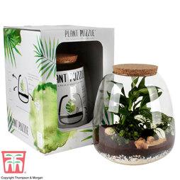 Plant Puzzle Terrarium