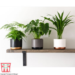 Instant Impact Collection (House Plant)
