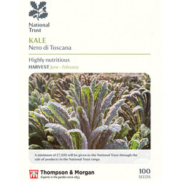 Kale 'Nero di Toscana' (National Trust)