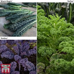 Kale Mixed Collection