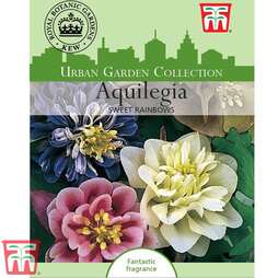 Aquilegia 'Sweet Rainbows' - Kew Collection Seeds