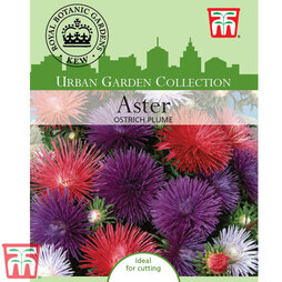 Aster 'Ostrich Plume Mixed' - Kew Collection Seeds