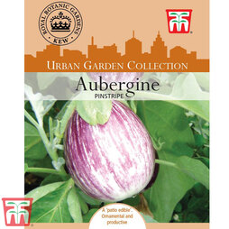 Aubergine 'Pinstripe' F1 Hybrid - Kew Collection Seeds