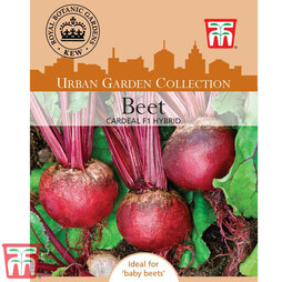 Beetroot 'Cardeal' F1 Hybrid (Globe) - Kew Collection Seeds