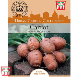 Carrot 'Paris Market Atlas' - Kew Collection Seeds