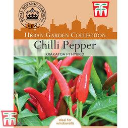 Chilli Pepper 'Krakatoa' F1 Hybrid (Hot)- Kew Collection Seeds