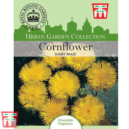 Cornflower 'Dairy Maid' - Kew Collection Seeds