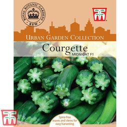 Courgette 'Midnight' F1 Hybrid - Kew Collection Seeds