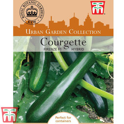 Courgette 'Firenze' F1 Hybrid - Kew Collection Seeds
