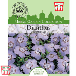 Dianthus amurensis 'Siberian Blues' - Kew Collection Seeds