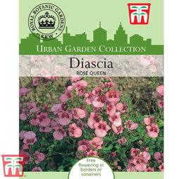 Diascia barberae 'Rose Queen' - Kew Collection Seeds