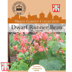 Runner Bean 'Millionaire' (Dwarf) - Kew Collection Seeds