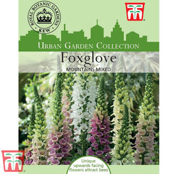 Foxglove 'Mountains Mixed' - Kew Collection Seeds