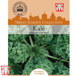 Kale 'Starbor' F1 Hybrid - Kew Collection Seeds
