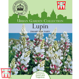 Lupin 'Dwarf Fairy Pink' - Kew Collection Seeds