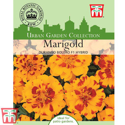 Marigold 'Durango Bolero' F1 Hybrid - Kew Collection Seeds