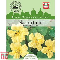 Nasturtium 'Whirlybird Cream' - Kew Collection Seeds