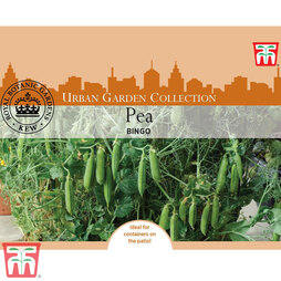 Pea 'Bingo' (Early Maincrop) - Kew Collection Seeds