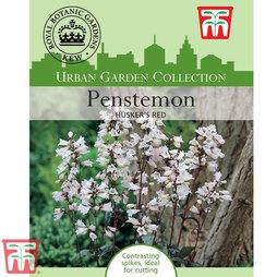 Penstemon digitalis 'Husker Red' - Kew Collection Seeds