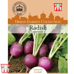 Radish 'Amethyst'- Kew Collection Seeds