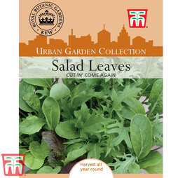 Salad Leaves 'Cut 'n' Come Again'- Kew Collection Seeds