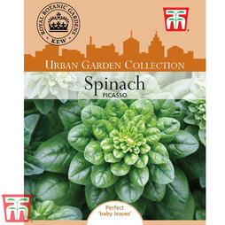 Spinach 'Picasso' F1 Hybrid- Kew Collection Seeds