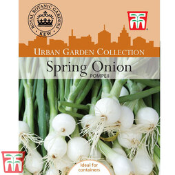 Spring Onion 'Pompeii'- Kew Collection Seeds