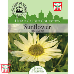 Sunflower 'Key Lime Pie' - Kew Collection Seeds