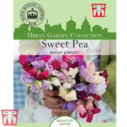 Sweet Pea 'Bright and Breezy' - Kew Collection Seeds