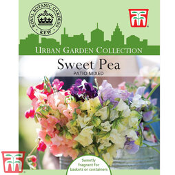 Sweet Pea 'Patio Mixed' - Kew Collection Seeds
