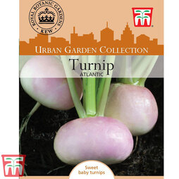 Turnip 'Atlantic' - Kew Collection Seeds