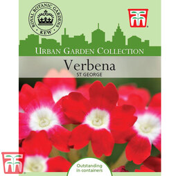 Verbena x hybrida 'St George' - Kew Collection Seeds