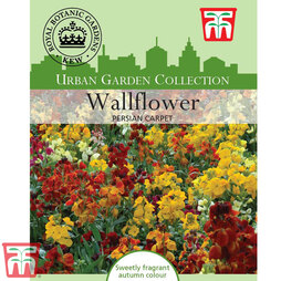Wallflower 'Persian Carpet' - Kew Collection Seeds