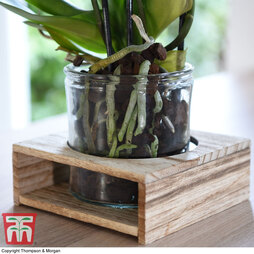 Kindu Glass Pot Wooden Tray Vase