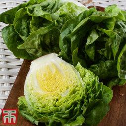 Lettuce Vailan 'Winter Gem'