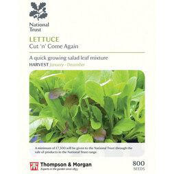 Lettuce 'Valmaine' (Romaine/Cut And Come Again) (National Trust)