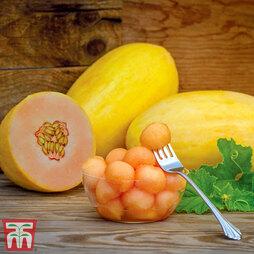 Melon 'Mangomel'