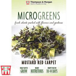 Microgreens Mustard 'Red Carpet'