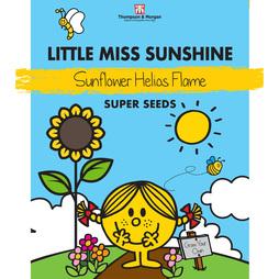 Little Miss Sunshine - Sunflower 'Helios Flame'